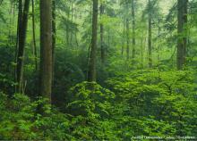 Avoided Deforestation Carbon Offset Market