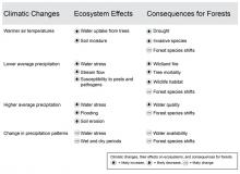 Climatic changes, their effects on ecosystems, and consequences for forests.